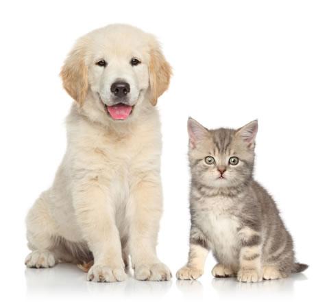 竹山動物病院の診療方針について